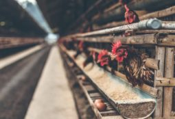 Poultry-sector-image