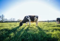 dairy industry image