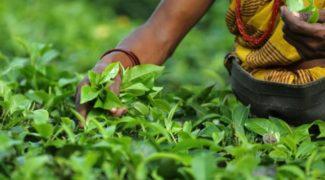 image cash crop